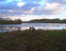 Weir Wood Reservoir httpsuploadwikimediaorgwikipediacommonsthu