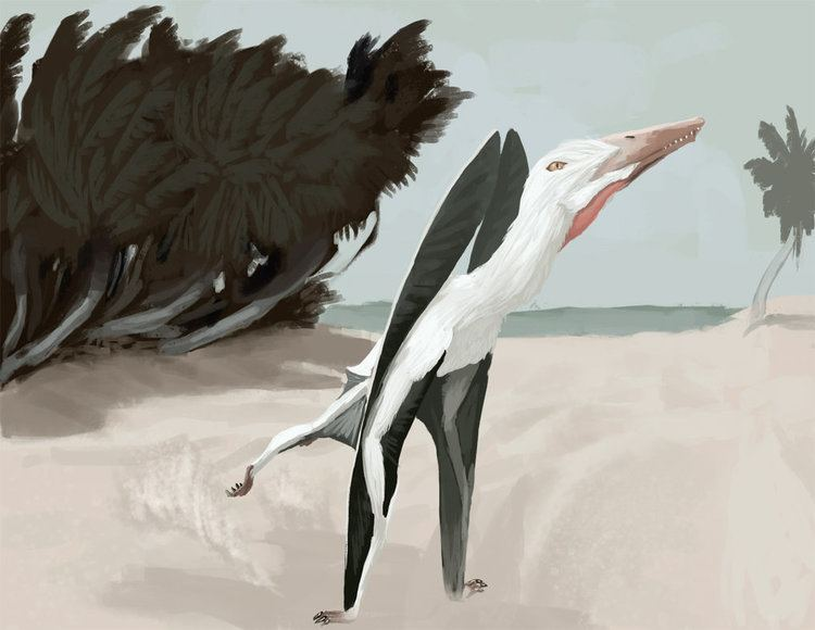 Wenupteryx pre09deviantartnet7350thpref2015272c9pt
