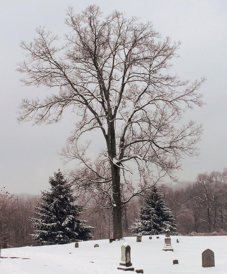 Wesleyan Cemetery, Cincinnati