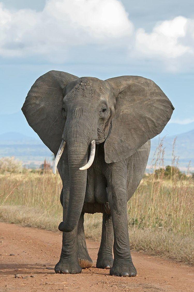 West African Elephant Memorandum of Understanding