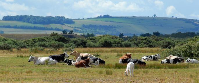 West Berkshire Beautiful Landscapes of West Berkshire