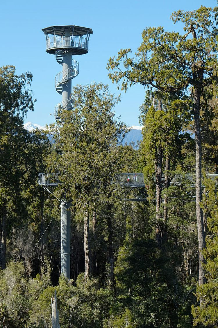 West Coast Treetop Walk