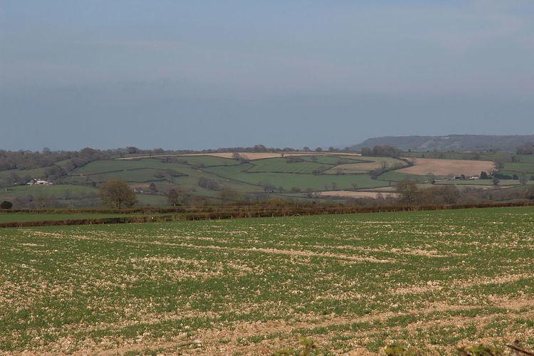 West Hill, Dorset