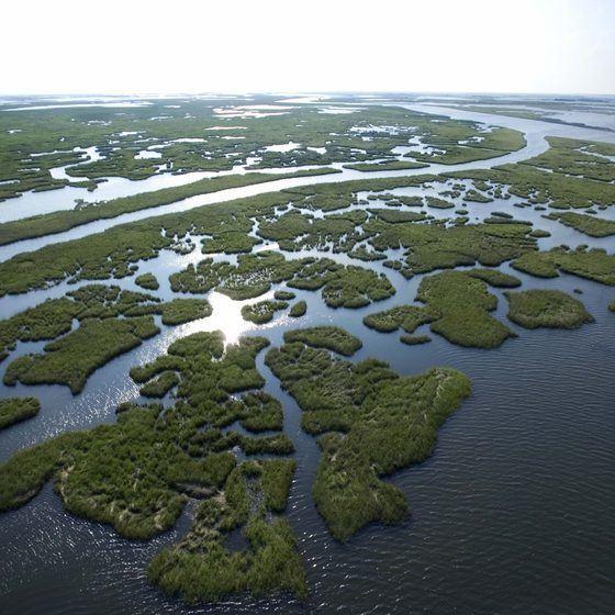Wetlands of Louisiana Louisiana39s Top 10 Wetlands USA Today
