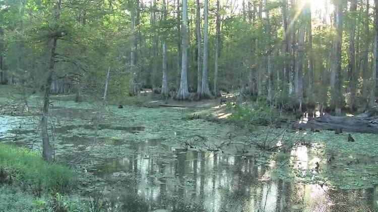 Wetlands of Louisiana The Untold Story Disappearing Louisiana Wetlands YouTube