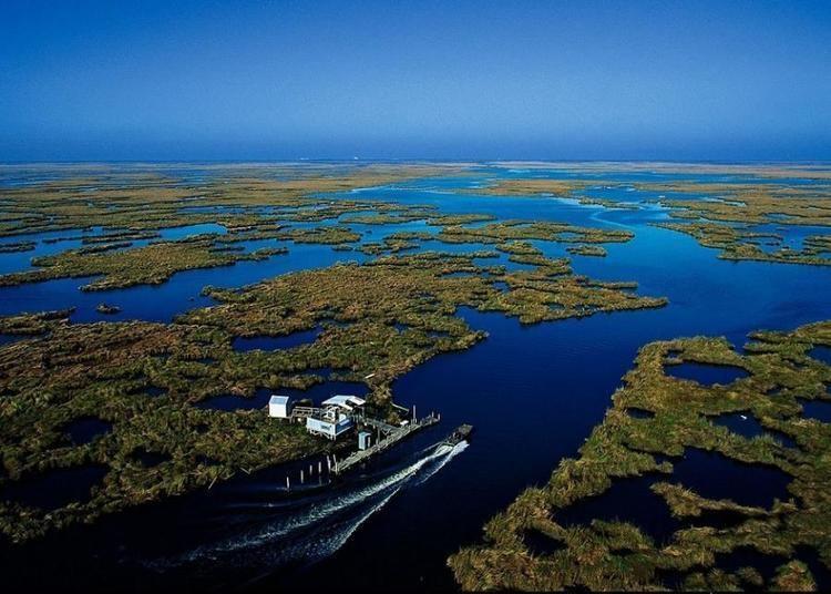 Wetlands of Louisiana Louisiana Wetlands George Brownell