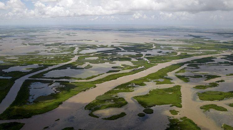 Wetlands of Louisiana La Flood Board Sues Oil Industry Over Wetlands NPR