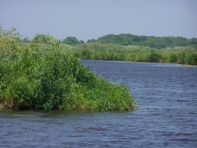 Wetlands of Louisiana wwwvrmlk12lausvicterynew08louisiana100489