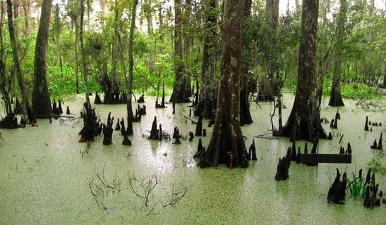 Wetlands of Louisiana Louisiana39s wetlands can39t take much more abuse Lake Scientist