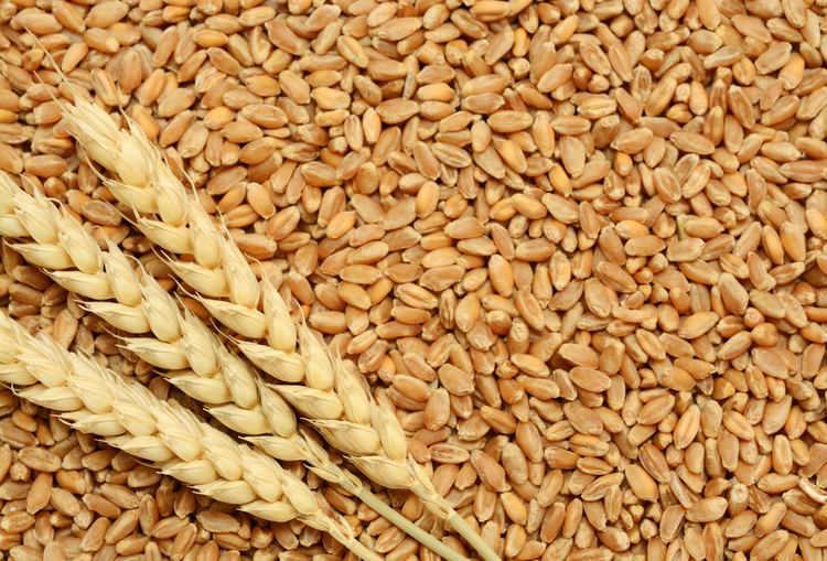 Wheat Wheat Broker Wheat Broker Suppliers and Manufacturers at Alibabacom