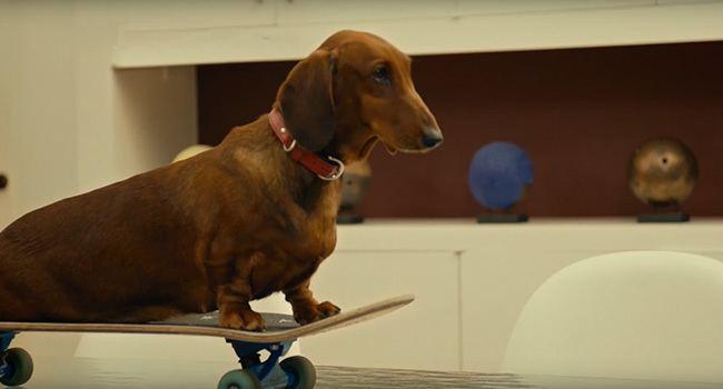WienerDog Movie ReviewDC Filmdom Entertainment reviews by