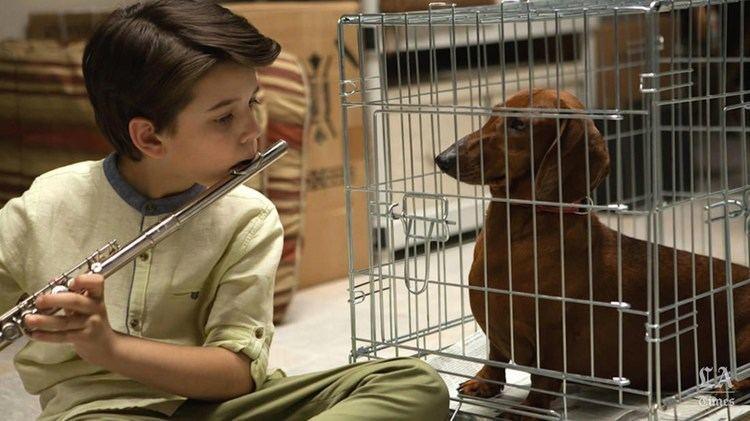 Sundance Film Festival 2016 WienerDog YouTube