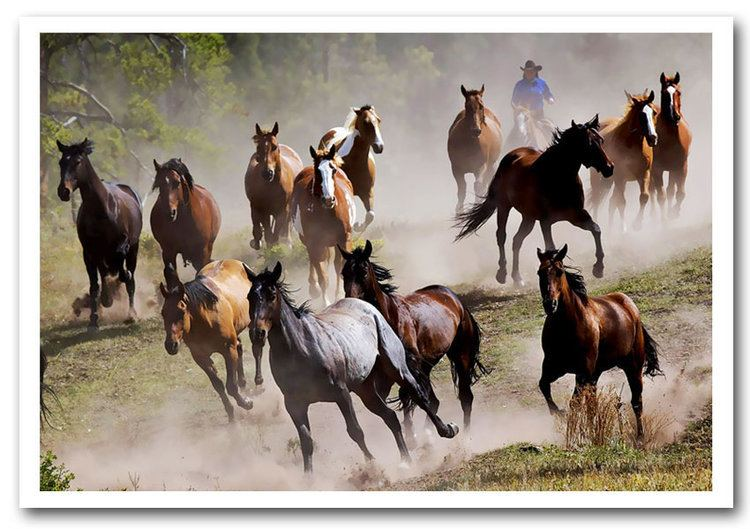 Wild Horse Stampede Wild Life Framed Art Giclee Art Print