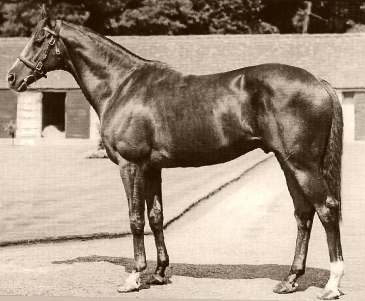 Wilkes (horse)