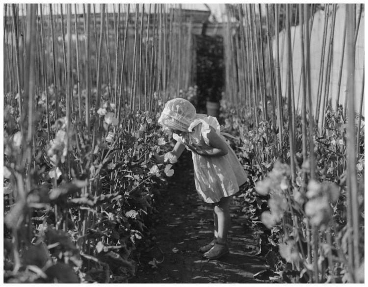 William Davis (photographer) Jill Davis daughter of photographer William Davis 1940
