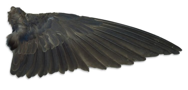 Wing Bird Wings Whats on a Wing Wilderness Awareness School