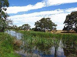 Woady Yaloak River httpsuploadwikimediaorgwikipediacommonsthu