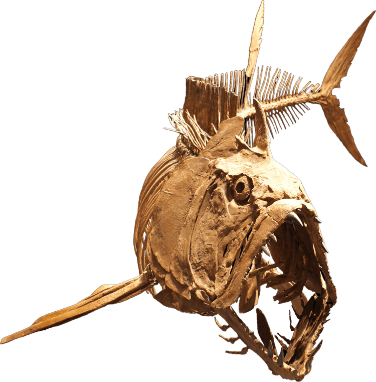 Xiphactinus - Alchetron, The Free Social Encyclopedia