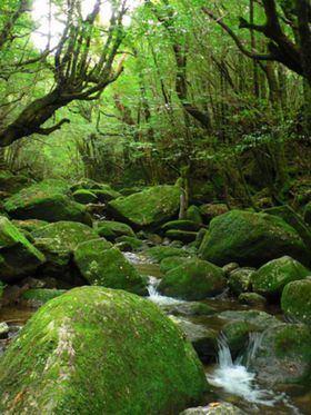 Yakushima wikitravelorguploadsharedthumbff9Yakushima