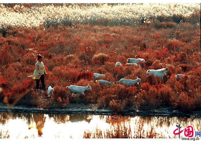 Yancheng Beautiful Landscapes of Yancheng