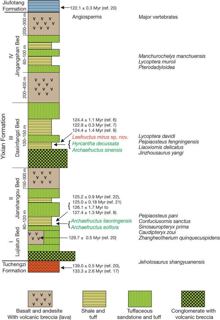Yixian Formation The ages of the Yixian Formation showing the fossil angiosperms and