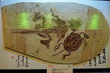Yixian Formation Paleobiota of the Yixian Formation Wikipedia