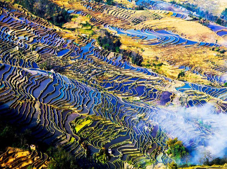 Yunnan wwwchinadiscoverycomimagesyunnanyunnanricet