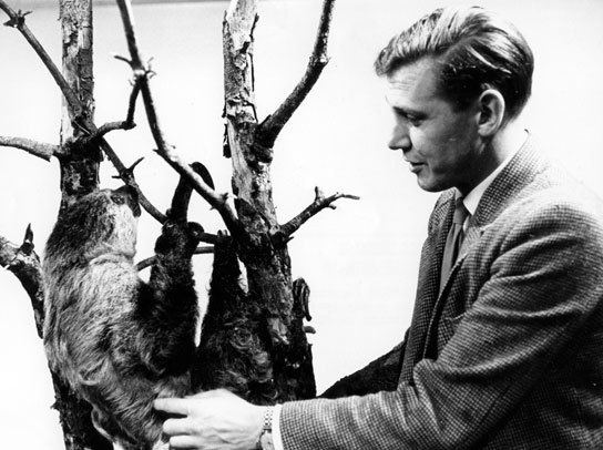Zoo Quest BBC Archive David Attenborough Zoo Quest for a Dragon David