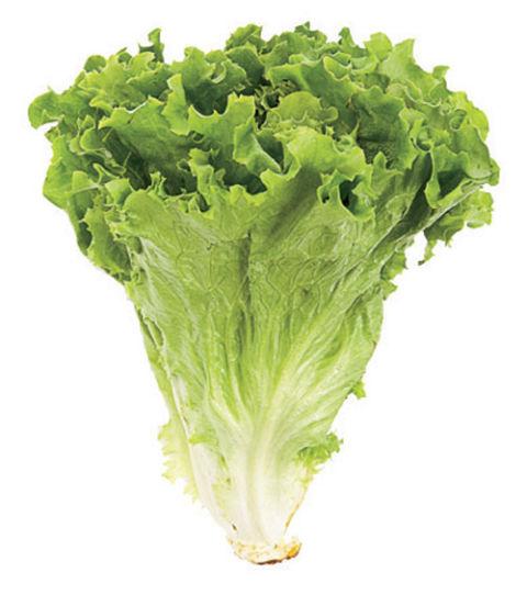 Lettuce Types of Lettuce Different Varieties of Lettuce